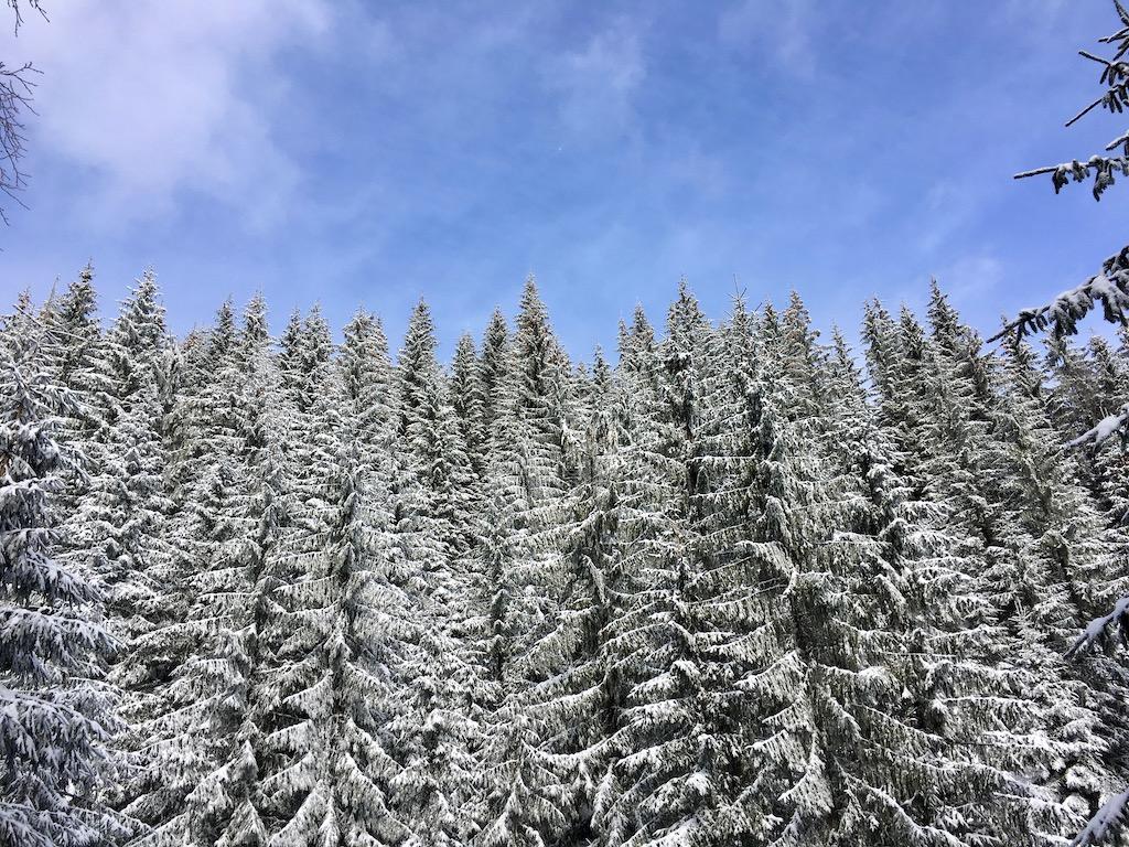 Karpaten - Apuseni - Tour - Reise - Urlaub - Rumänien - Reiseführer - Natur - Berge - Individualreise - Schneewandern - Höhle - Osteuropa