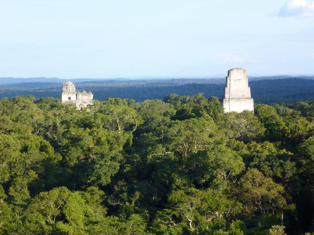 Dschungel mit Spitzen von 3 Pyramiden