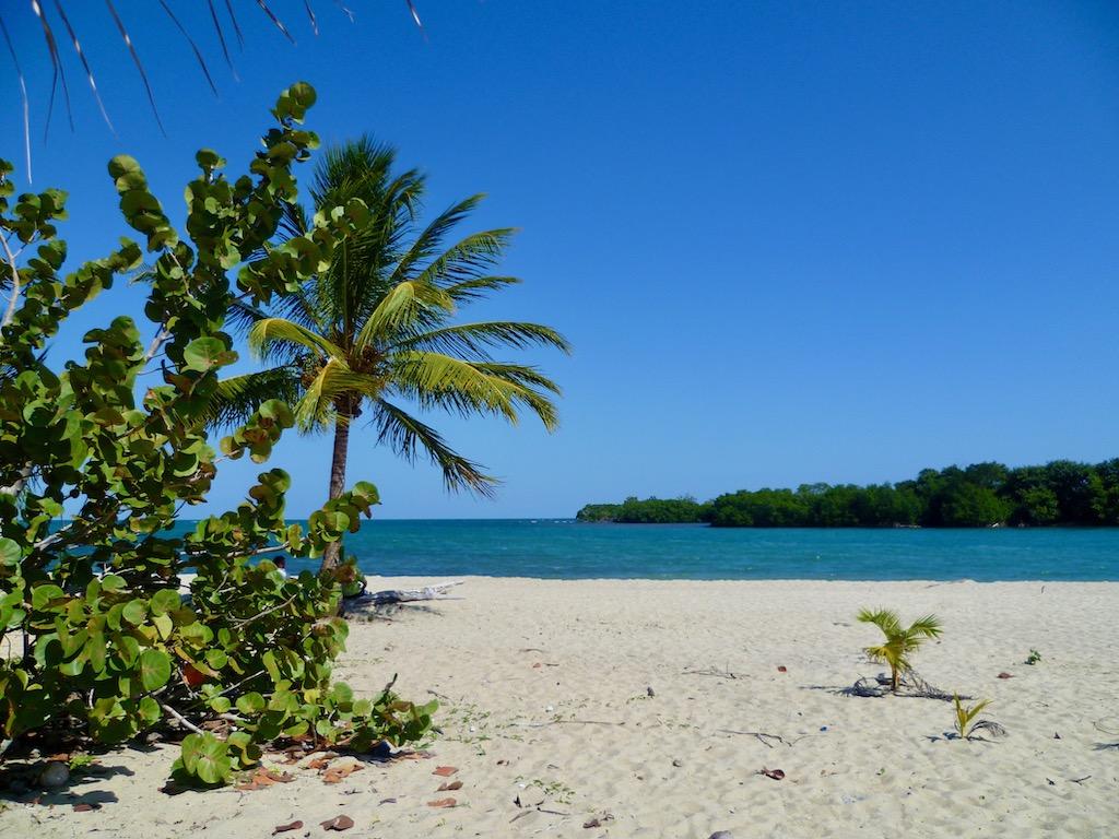 Strand Meer Palmen